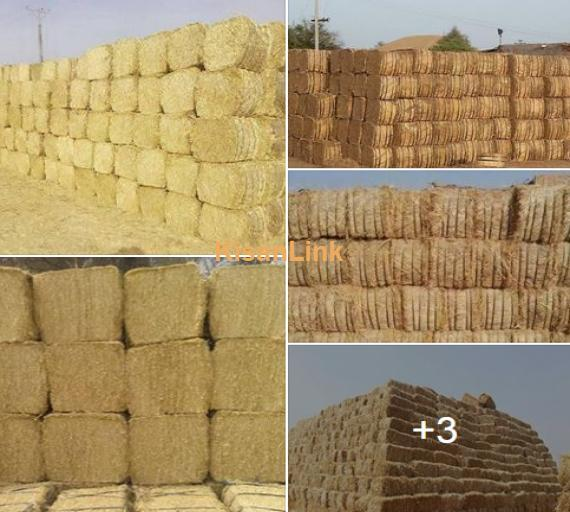 Straw For Sale(بھوسہ)